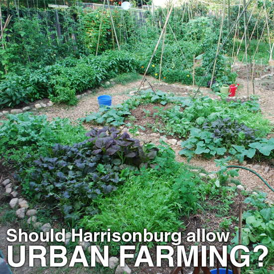 Should Harrisonburg allow Urban Farming?